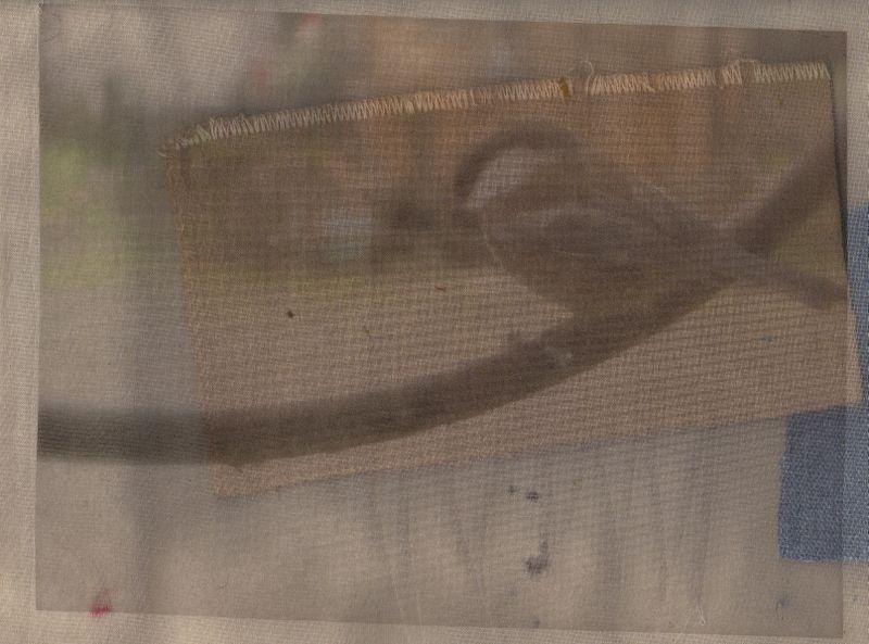 Bird on sheer310