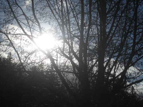 Sun during the winter