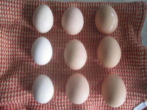 Nine eggs