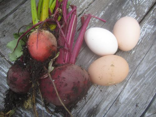 Beets and eggs