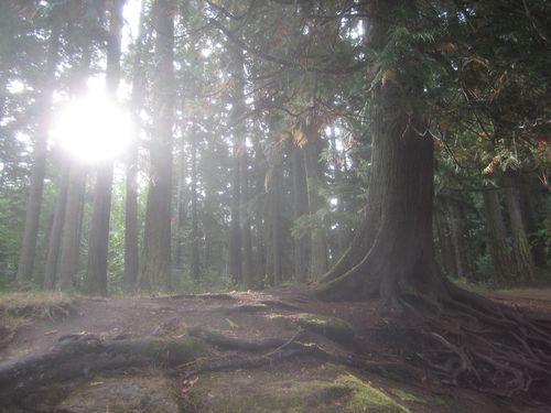 Sun and cedar