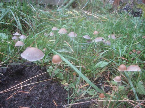 Mushroom colony