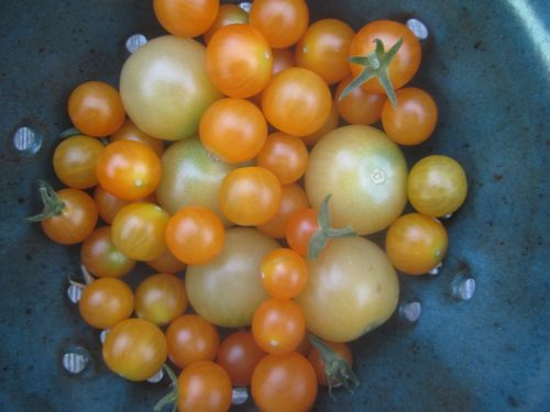My tomatoes