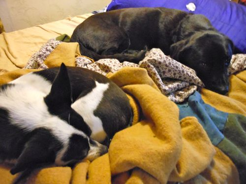 Nesting dogs