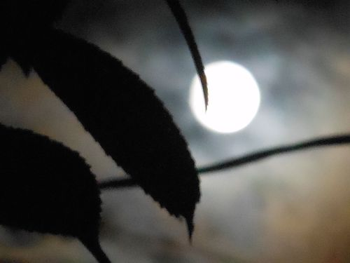 Moon and leaf