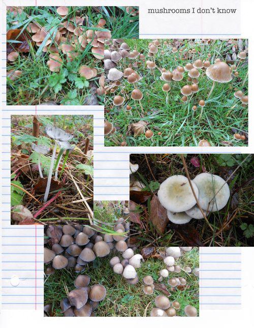 Mushroom page