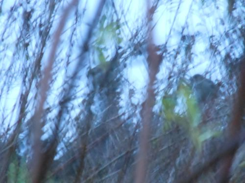 Song bird blur