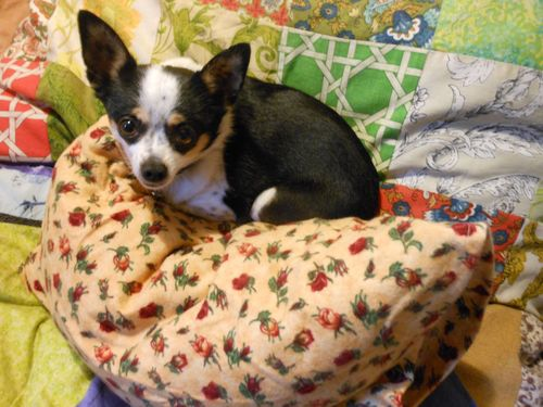 Pillow thief
