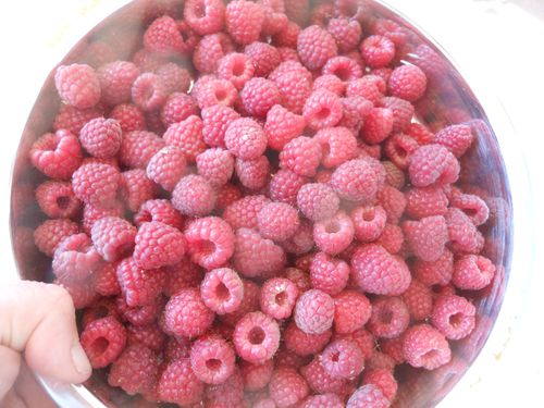 Raspberries in the cake pan