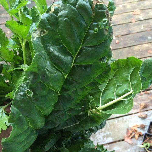 Swiss chard and parsley