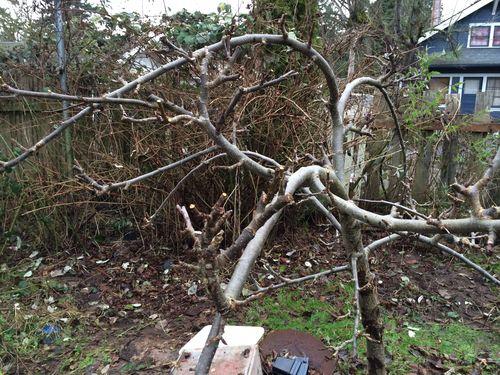 Apple tree and fence line