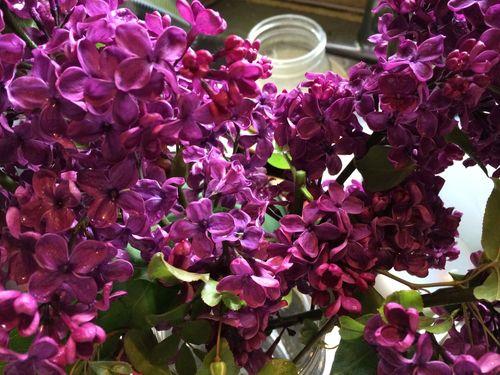 Lilacs for deanna