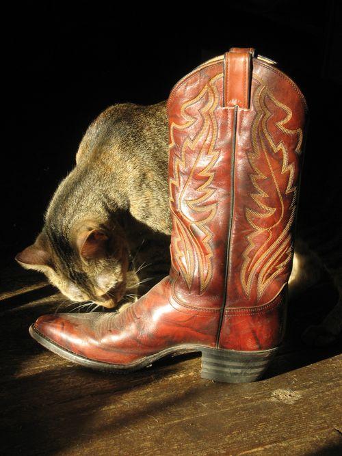 Hazel with boot