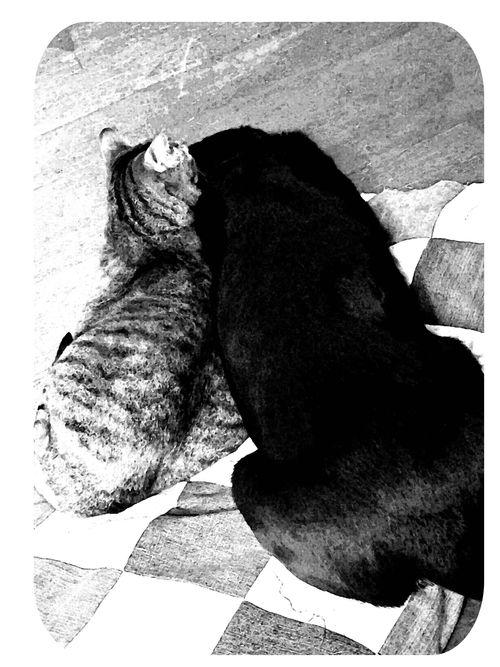 Hazel and briar