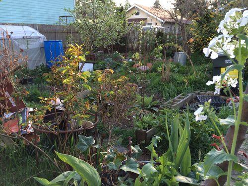 Garden current