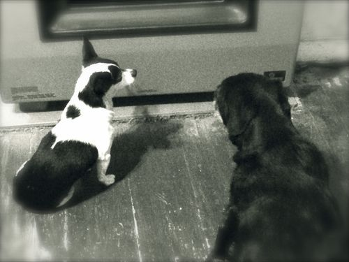 Dogs looking for heat