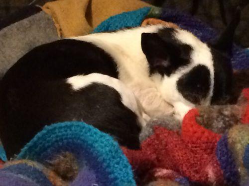Lola sleeping in the leftover blanket