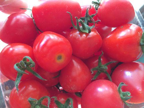 Tomatoes in season