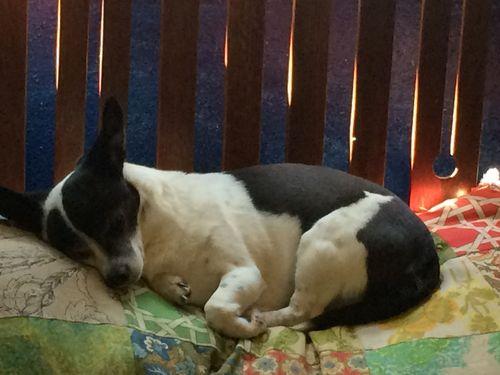 Lola on pillow
