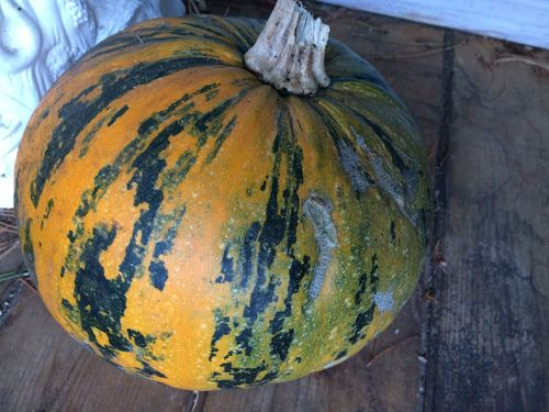 Stripped pumpkin