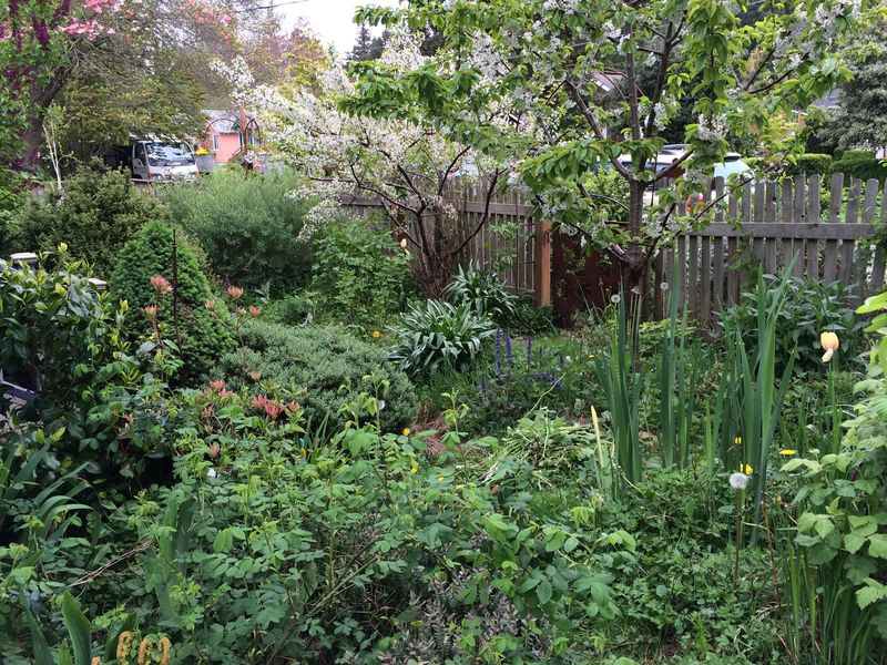 Front garden april