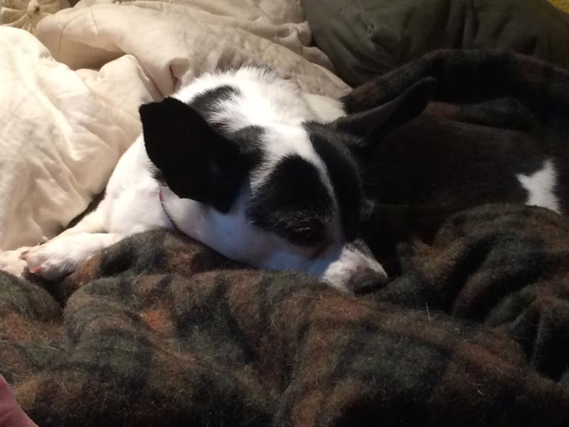 Sleepy lola