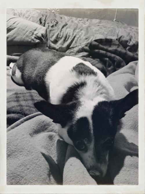 Lola loves blankets