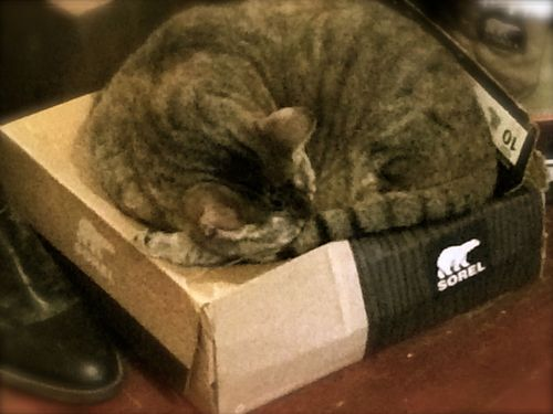 Cat on box