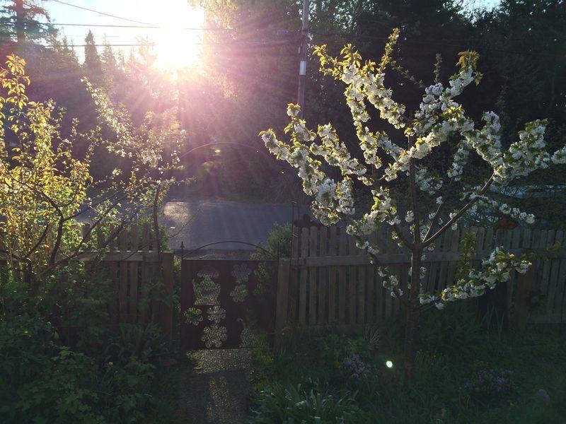 Morning veiw sun
