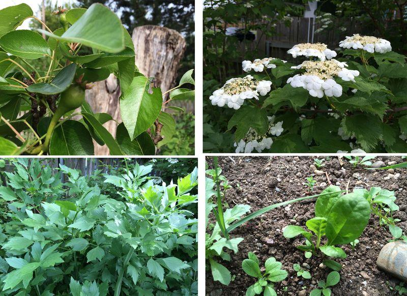 Garden may 10