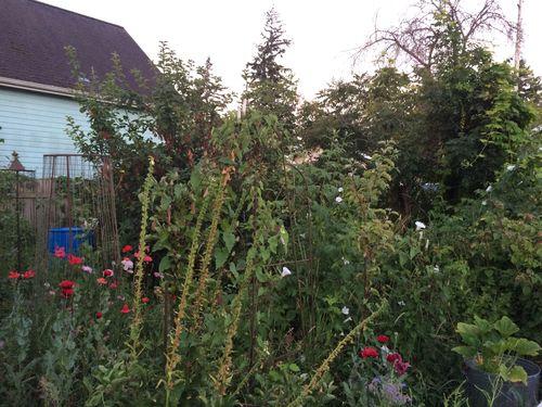 Garden at dawn