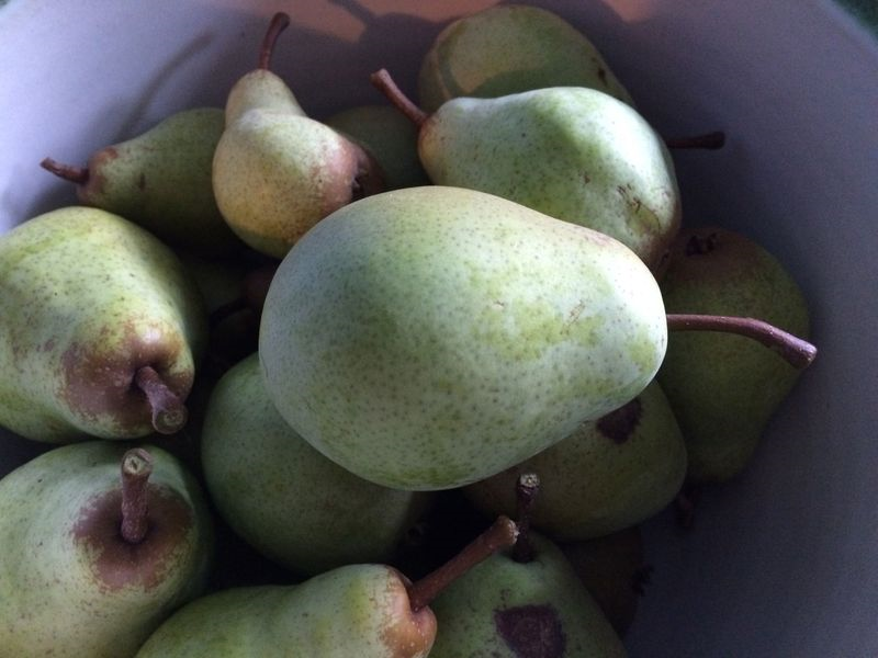 Pears 2015