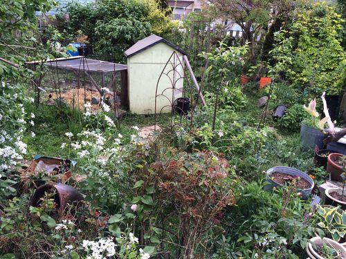 Back garden april
