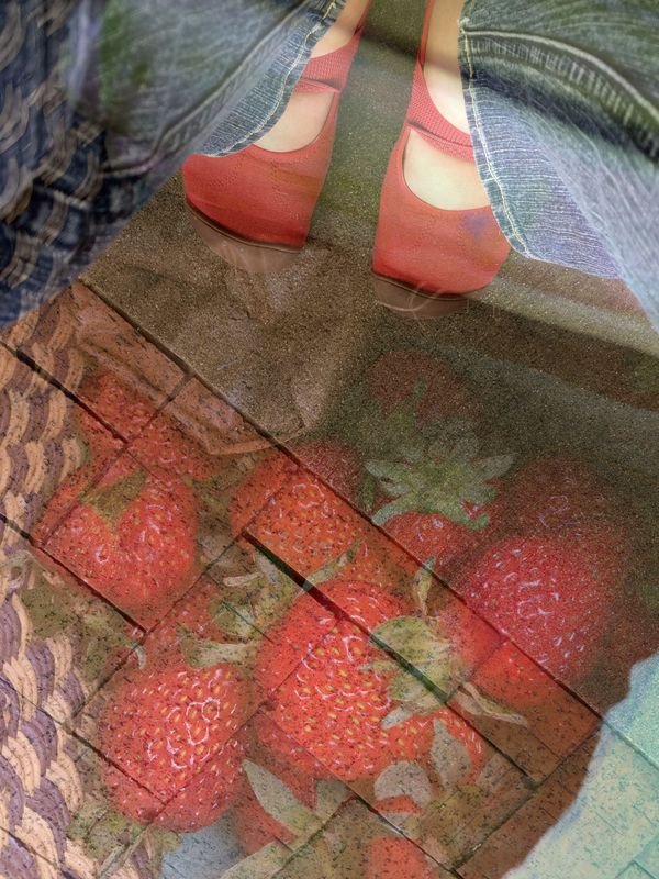 Path to strawberries