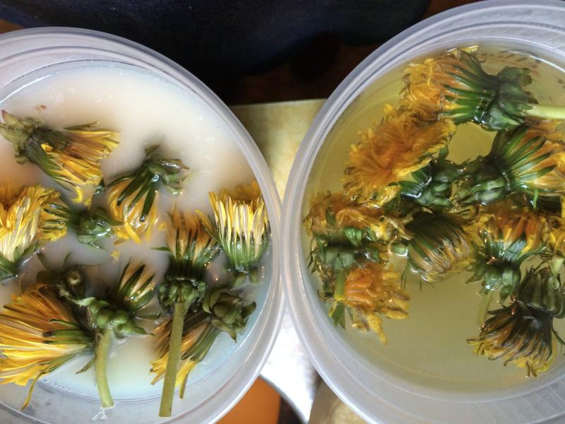 Dandelion experiment