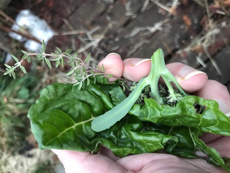 a handful of green