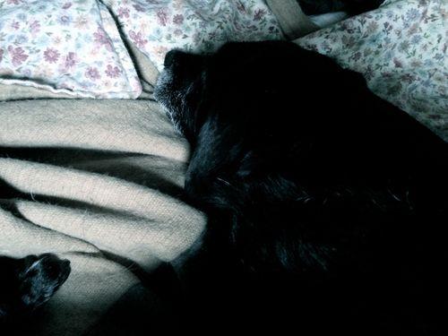 Briar resting
