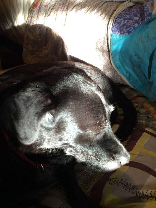 Briar in the sunshine
