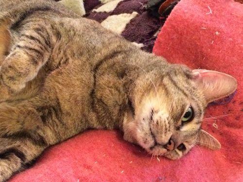 Hazel on blankets