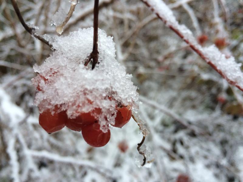 Highland cranberries