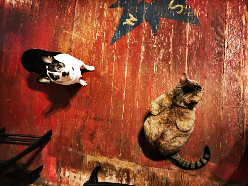 compass, cat and chihuahua