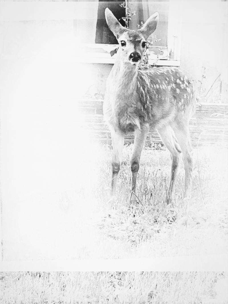 Oh baby deer