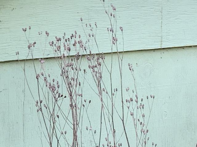 Weeds of beauty