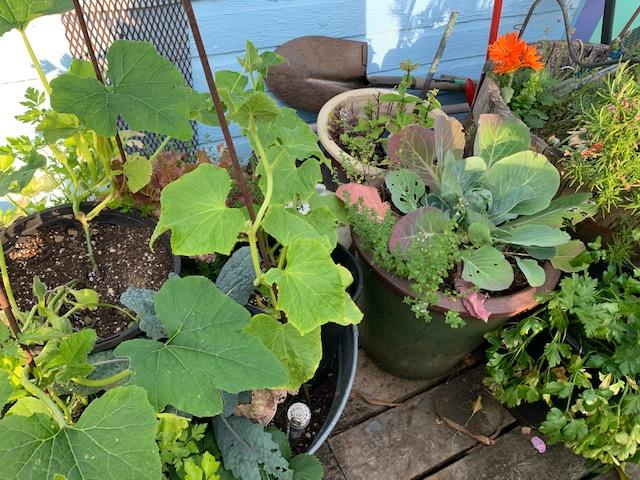 Porch garden