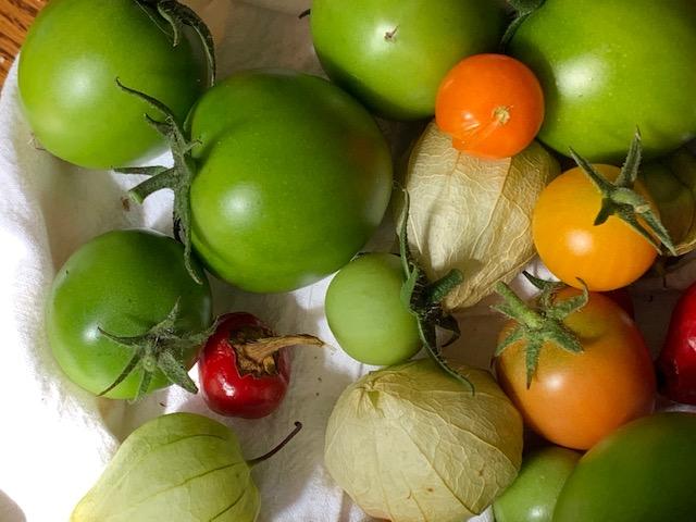 Oct harvest
