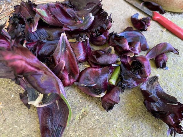 Tulips for dye