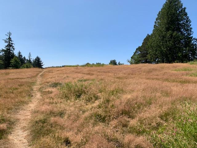 The field across the street