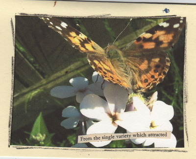 Butterfly_imt249_2